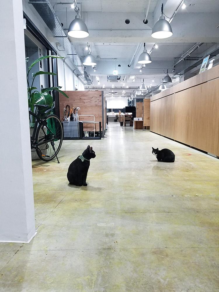 おしゃれなオフィスと猫と