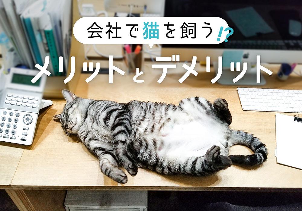 会社で猫を飼うメリットとデメリット