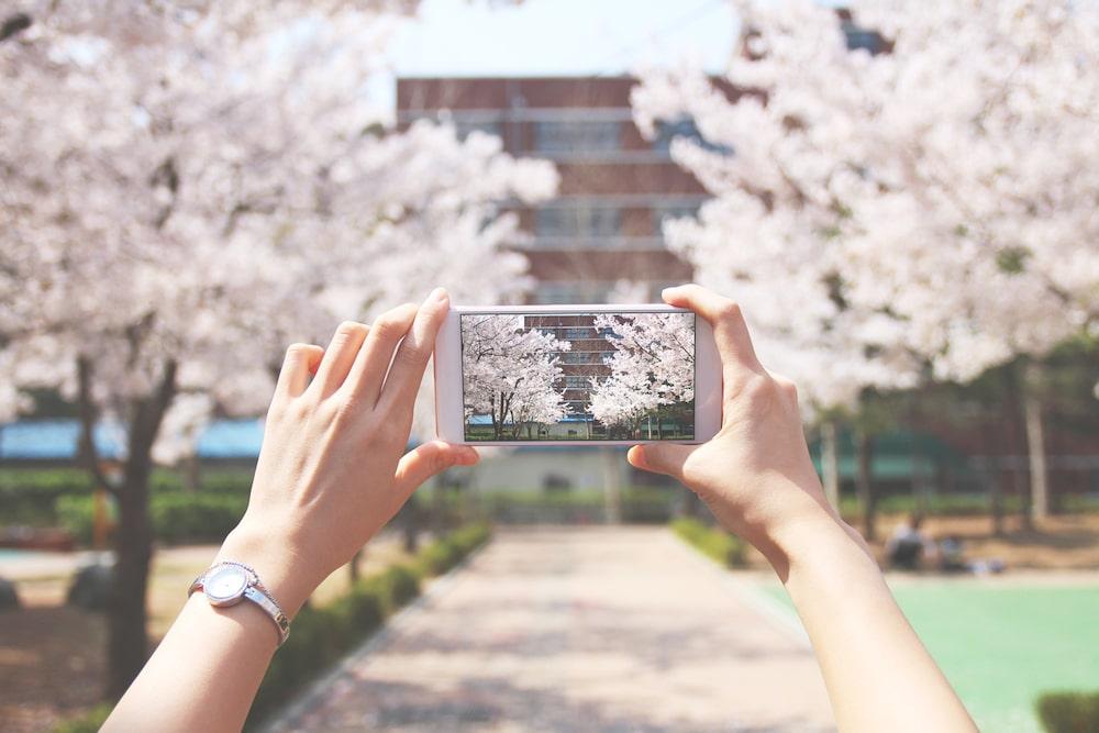 iPhoneで桜を撮りに行こう!